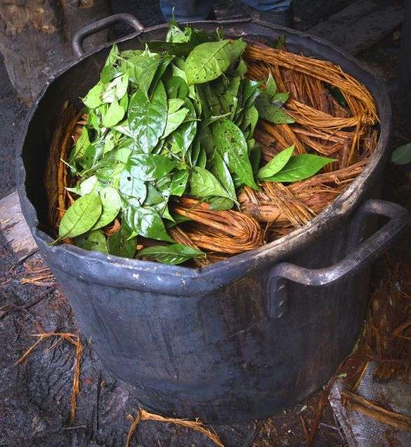 Ayahuasca is rapidly spreading around the world for it's incredible ability to treat and healdepression, anxiety, PTSD, and numerous mental…