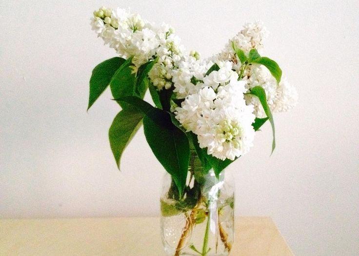 Profitez bien de votre lundi  #flowers #fleurs #lilas #lilac #white #inbloom