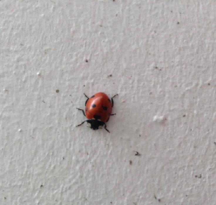 Op het lieven lieveheersbeestje staan punten, het lieveheersbeestje is zelf een vlak op de muur .Op de muur staan er ook punten.