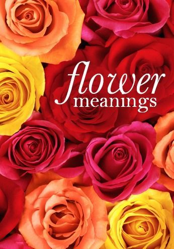 Flower meanings learn the language of flowers for Valentines day flowers for him