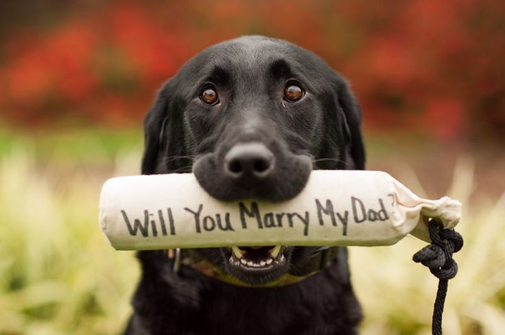 Doggie proposal | Capture every moment from the engagement to the honeymoon with CapsuleCam | trycapsule.com