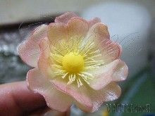 Цветок шиповника из соленого теста