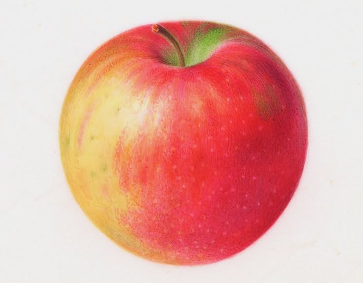 Brief video tutorial of painting a realistic apple in  watercolor