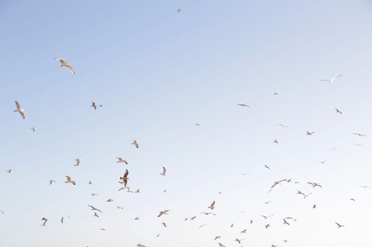 Seagulls on the Sea Shore #woolandthegang #brighton