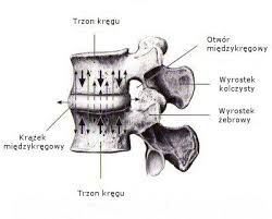 Znalezione obrazy dla zapytania obraz  worek oponowy objawy