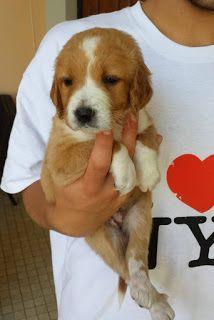 Ohana Dog_Blog: Cucciola in adozione Roma
