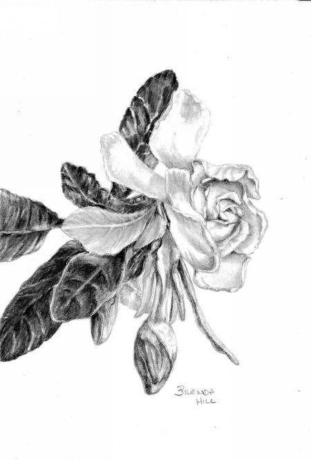 Gardenia, by Brenda Hill