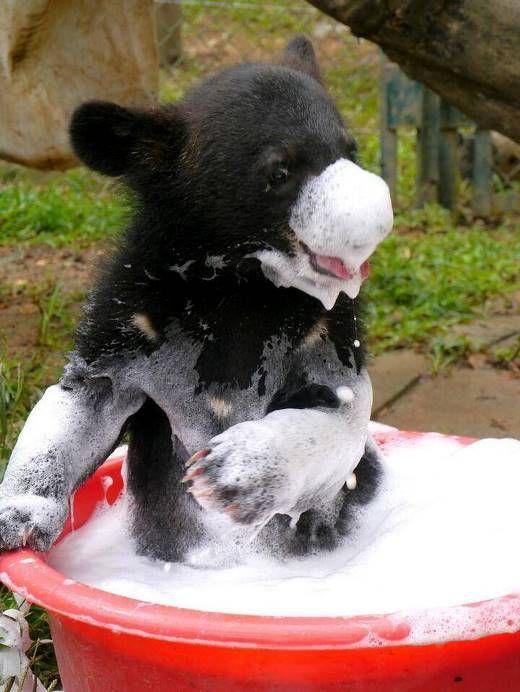 little bear enjoying bath