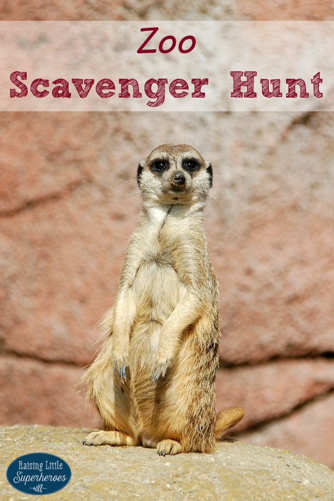 Are you going to the zoo? Go on a Zoo Scavenger Hunt.  It is a fun way for children to learn all about animals and their habitats.