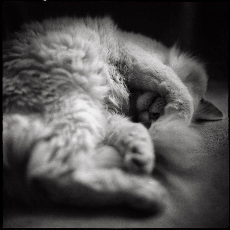 Юрий Карпов: Мой ленивый кот.