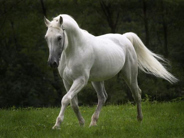 white horse: Journals Prompts, Food Court, Writing Prompts, Hors Pictures, White Hors, Sharks Week, Wild Hors, Fantasy Creatures, Black Hors