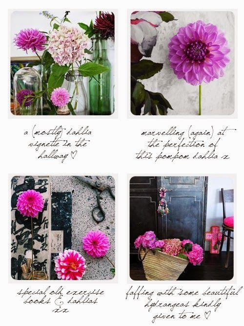 dahlias and flowers via small acorns blog