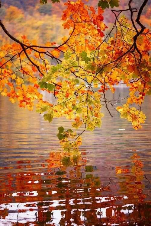 autumn leaves at the lake