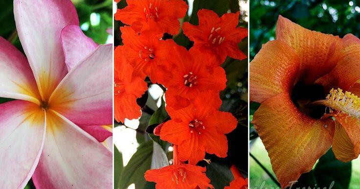 Los 8 árboles de floración más espectacular para tu jardín