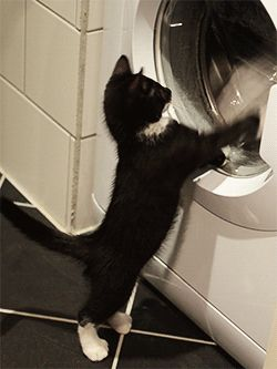 Purrr =^◕ω◕^=captain felix vs. the washing machine //more felix