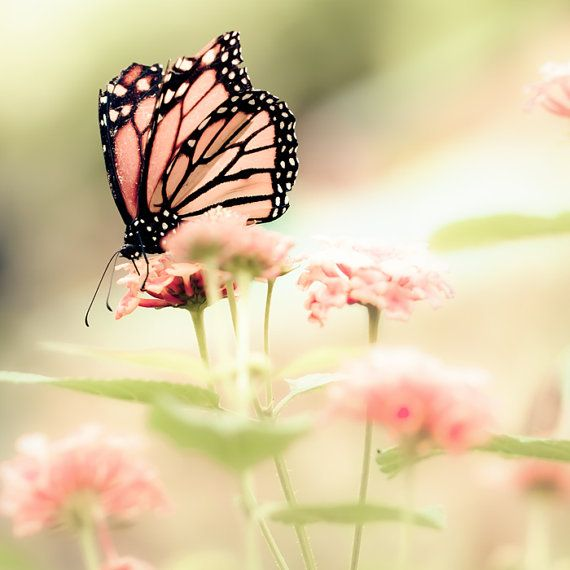 Pink Butterfly!