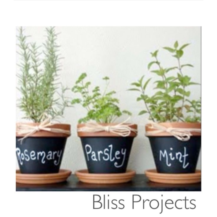 Chalkboard herb decor. Cute easy way to add fun to your kitchen. These little pots give character and a welcoming feeling to a home interior #blissprojects #terracotta #chalkboard #lifeandcolour #herbs #potplants #kitchendecor #gardening #diy #easyherbs #diyherbs #healthygreens #organic #mint #basil #homegarden