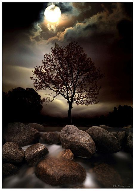 Дерево. Ночь. Луна. Небо ночное.
