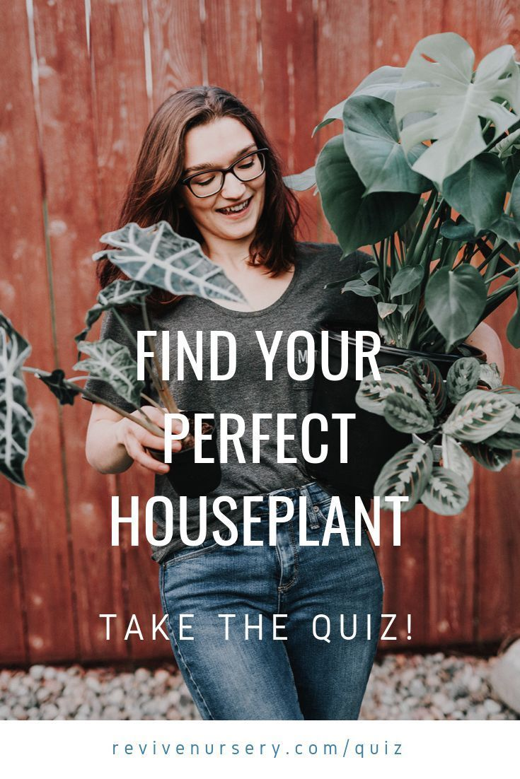 Find Your Perfect Houseplant Take The Quiz Revivenursery