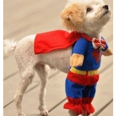 Need this for the kitty. haha: Small Dogs, Halloween Costumes, Dogs Costumes, Pet, Dogs Outfits, Super Heroes, So Funny, Little Dogs, Superhero