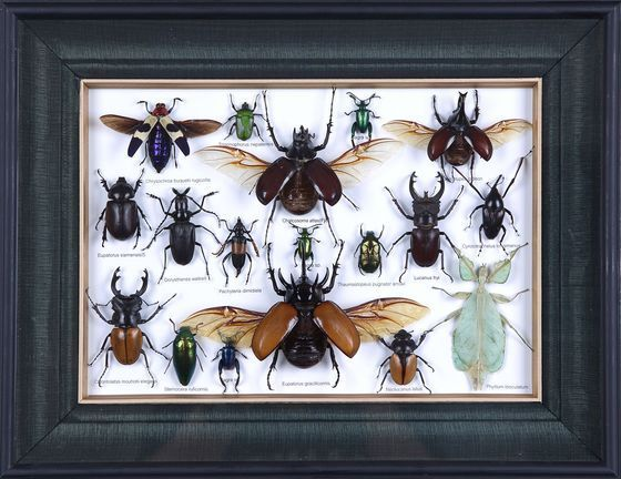 image of collection of preserved insects mini beasts framed insects