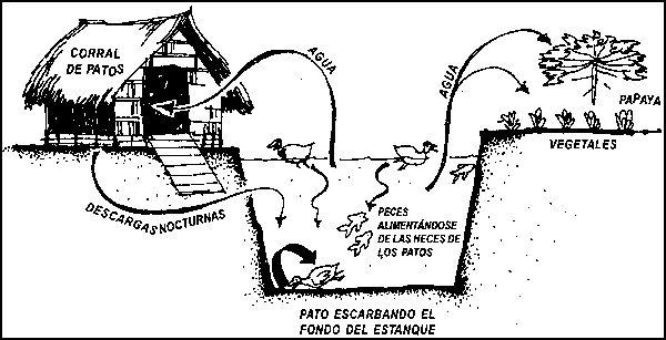 Agro-acuicultura integrada. Manual básico
