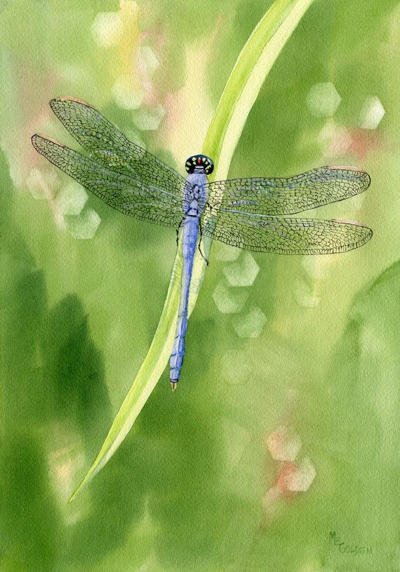 Blue Dragonfly giclee print by maryellengolden on Etsy, $30.00