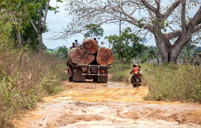 Quem passou em outubro pela estrada Maribel, que liga Altamira à Uruará, no Pará, encontrou inúmeros caminhões carregados de… | Cachoeira, Xingu, Floresta amazonica