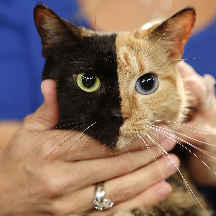 How Social Media Saves Lives (Pictured: Venus the Two-Face Cat has helped promote rescue organizations.)