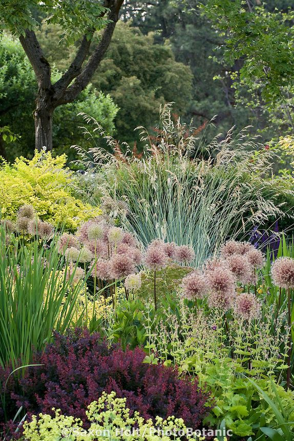 254 Best Images About Gardens - P&F: Grasses & Tall, Leggy Plants