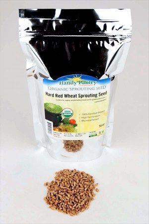 Organic Wheatgrass Seeds: Sprouting Wheat | Wheat Grass Seed