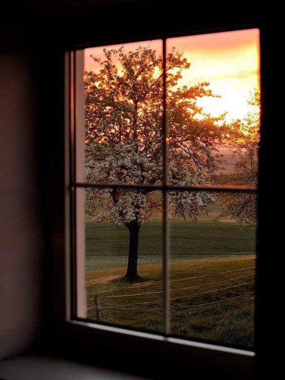 картинки вид из окна на закате муку, разрыхлитель корицу