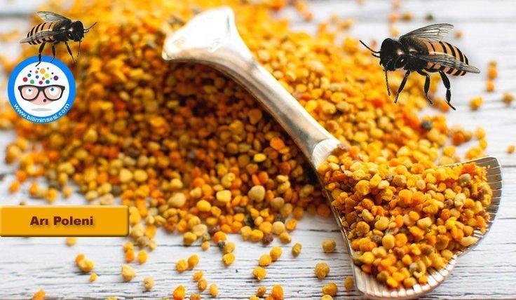Polenin faydaları, polenin zararları, Arı poleni faydaları, Arı poleni zararları, polenin fayfaları ve zararları, polen fayda ve zararları, Arı poleni faydaları