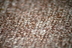 Your carpet provides good housing and protection for fleas.