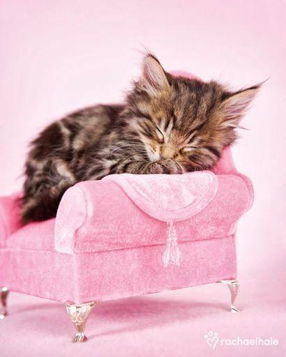 Precious kitten sleeping on her little pink sofa =^..^=