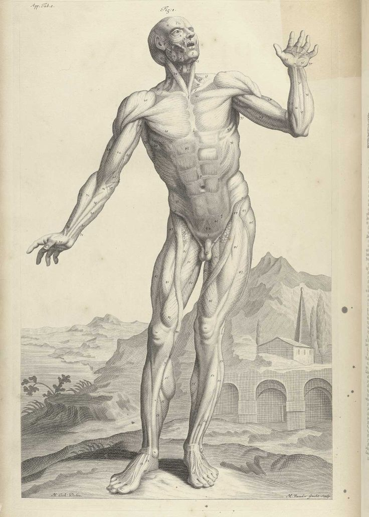 Cowper, William (1666-1709). The anatomy of humane bodies.