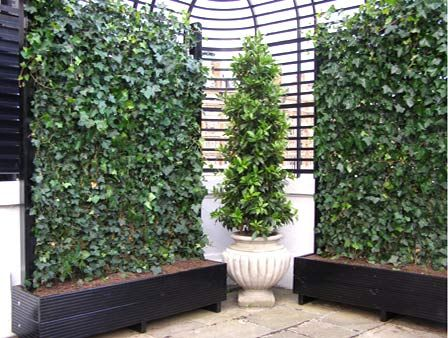 25 best ideas about trough planters on pinterest garden for Tall planters for privacy