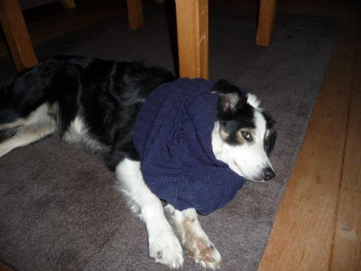 Ik heb het koud