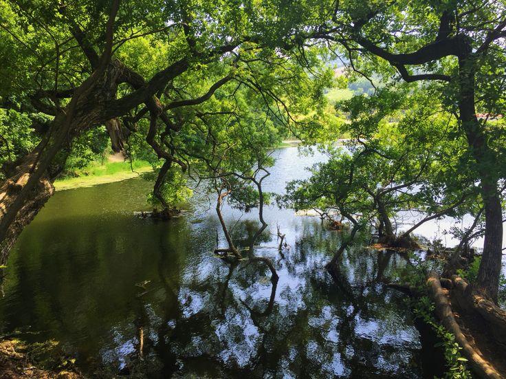 반곡지 in Gyungsan / Jun 5, 2016 / #Korea #한국여행 #경상북도 #경산 #반곡지 #사진명소 #산책 #호수 #저수지 #대구근교 #여름 #Summer #나무 #tree
