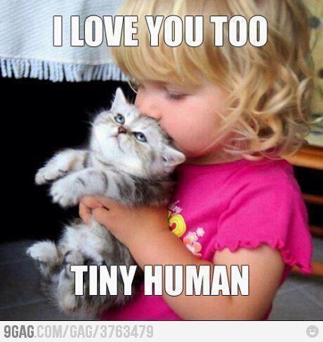 Cute kitty love