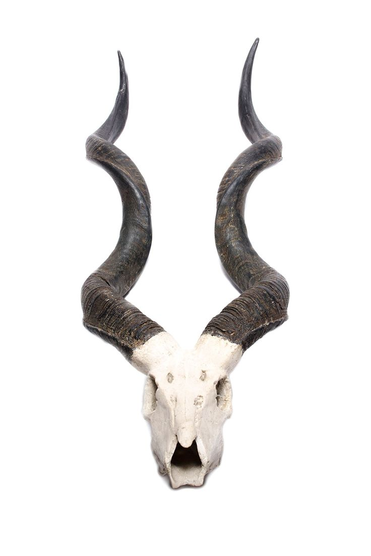 Kudu Wall Horns
