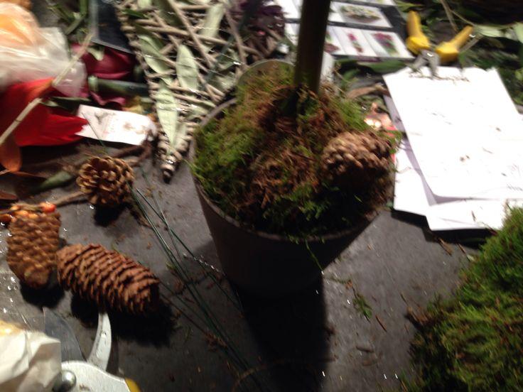 2# sette juleting på plante