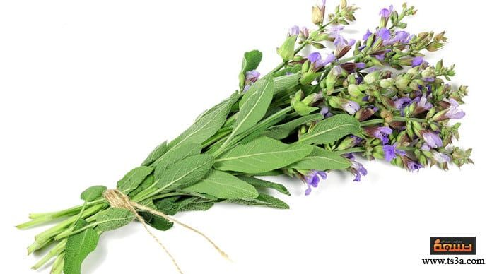 كيف تستعملي عشبة الميرمية للحصول على شعر صحي لامع Https Www Ts3a Com D8 B9 D8 B4 D8 A8 D8 A9 D8 A7 D9 84 D9 85 D9 8a D8 B1 D9 85 D9 8a D8 A Herbs Parsley