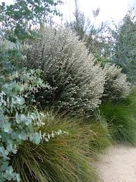 australian coastal garden - Google Search
