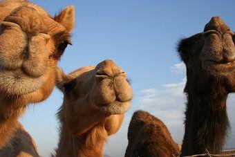 Mittlerer Osten Tiere | Mittlerer Osten Reiseführer