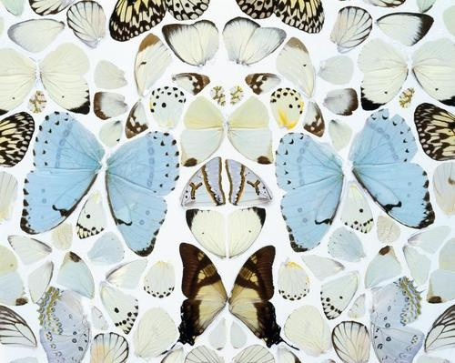 Damien Hirst, Sympathy in White Major – Absolution II, 2006. currently my facebook cover ;)