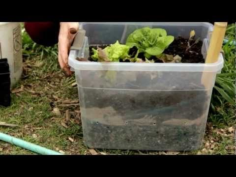 Wicking bed gardengood for drought climates. | Garden