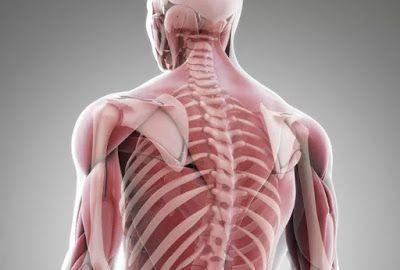 БЛОГ ПОЛЕЗНОСТЕЙ: Секрет наших мышц, откладывающий старость
