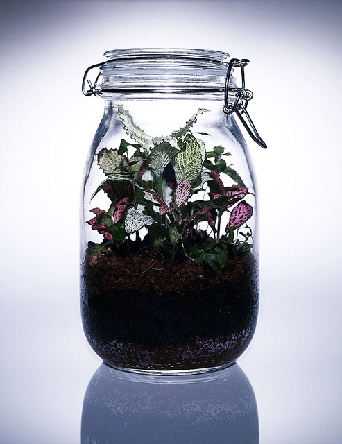 Terrarium, a miniature garden in an artificial environment, in which small plants and animals may be kept as ornament or for educational purposes. Fish bowls, small fish tanks, large bottles, and carboys are often employed as containers for terrarium