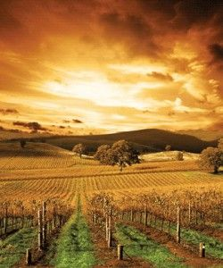 The Barossa Valley is one of Australia's oldest wine regions. Located in South Australia, the Barossa Valley is about 56 km (35 miles) northeast of the city of Adelaide.